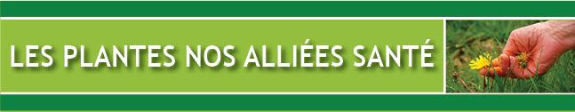 Les Plantes Nos Alliées Santé